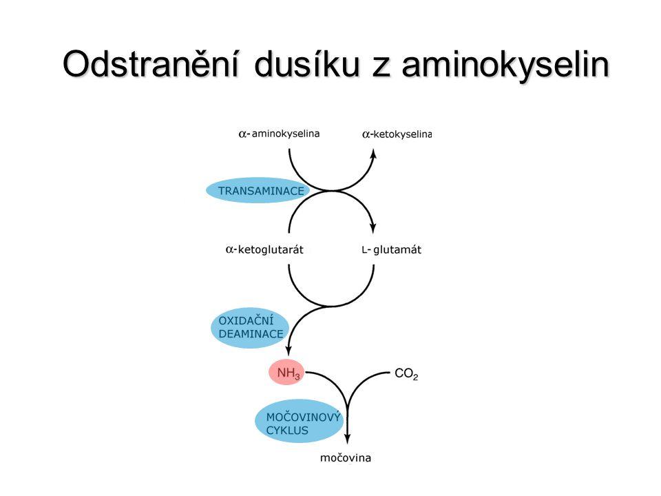 Odstranění dusíku z aminokyselin