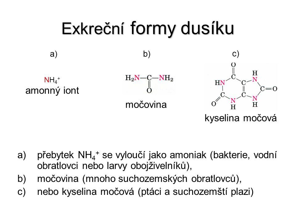 Exkreční formy dusíku amonný iont močovina kyselina močová