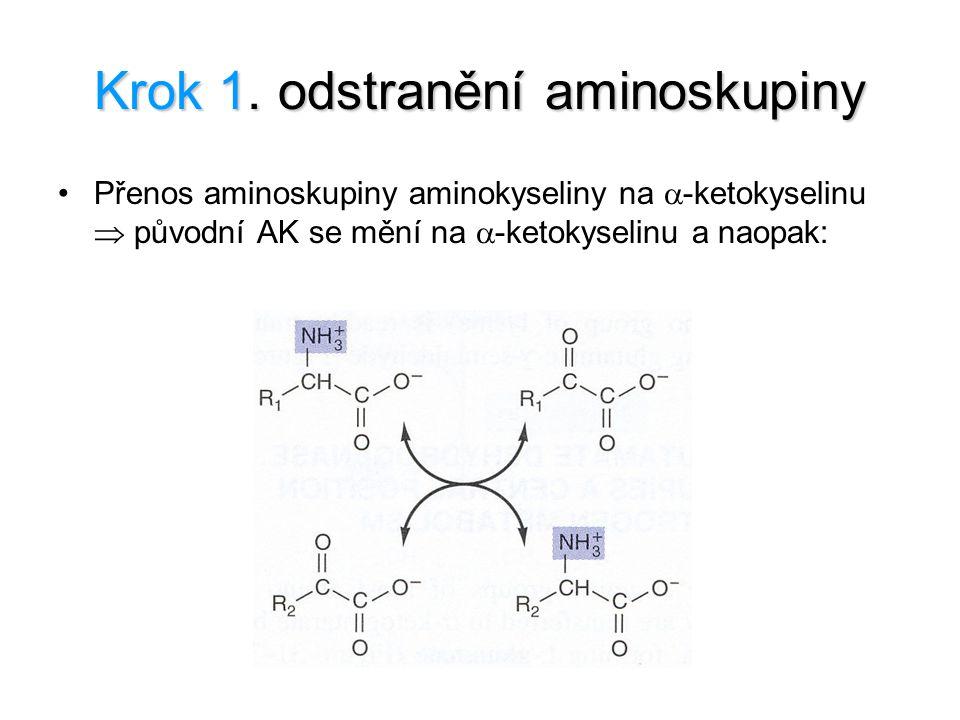 Krok 1. odstranění aminoskupiny