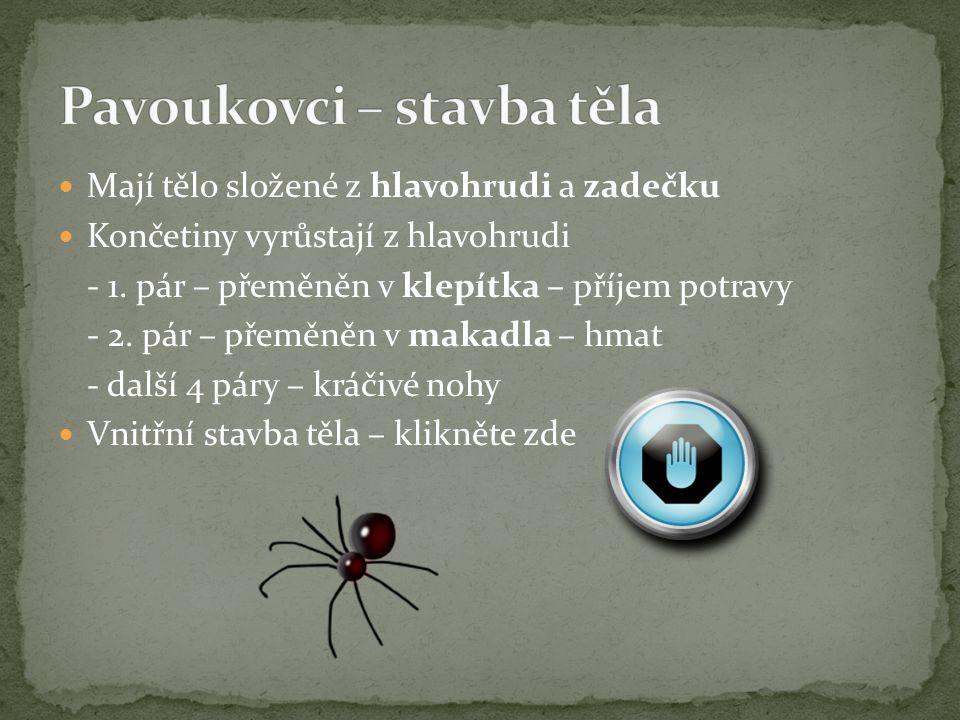 Pavoukovci – stavba těla