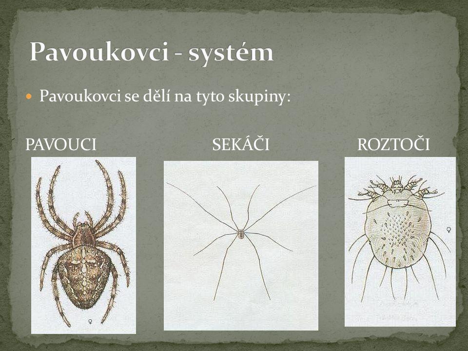 Pavoukovci - systém Pavoukovci se dělí na tyto skupiny: