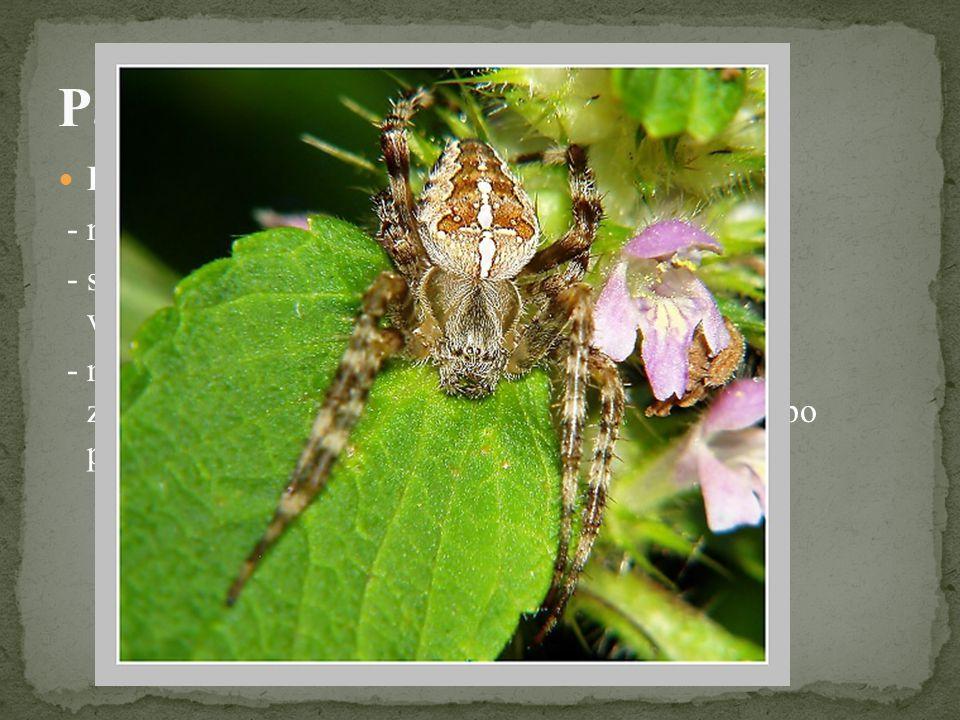 Pavouci - zástupci Křižák obecný - náš nejznámější pavouk