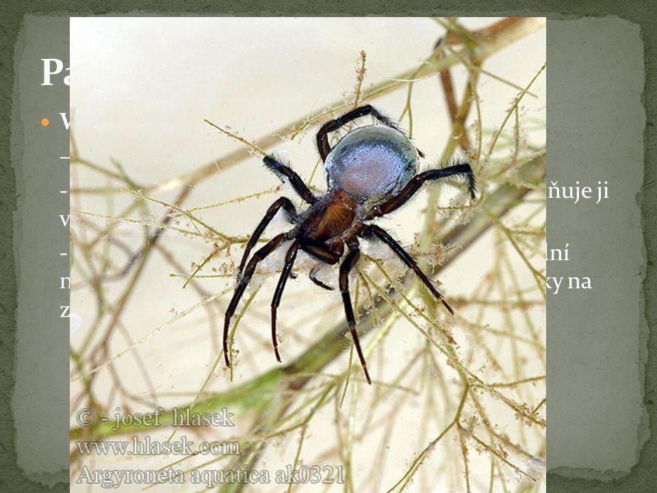 Pavouci - zástupci Vodouch stříbřitý – jediný pavouk žijící pod vodou