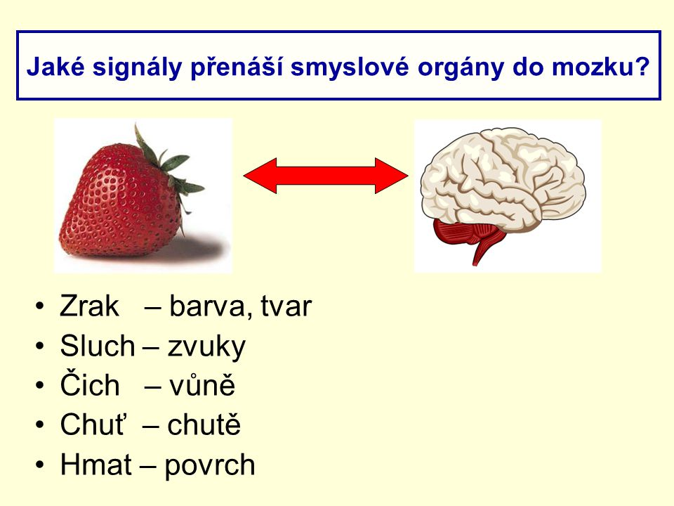 Jaké signály přenáší smyslové orgány do mozku