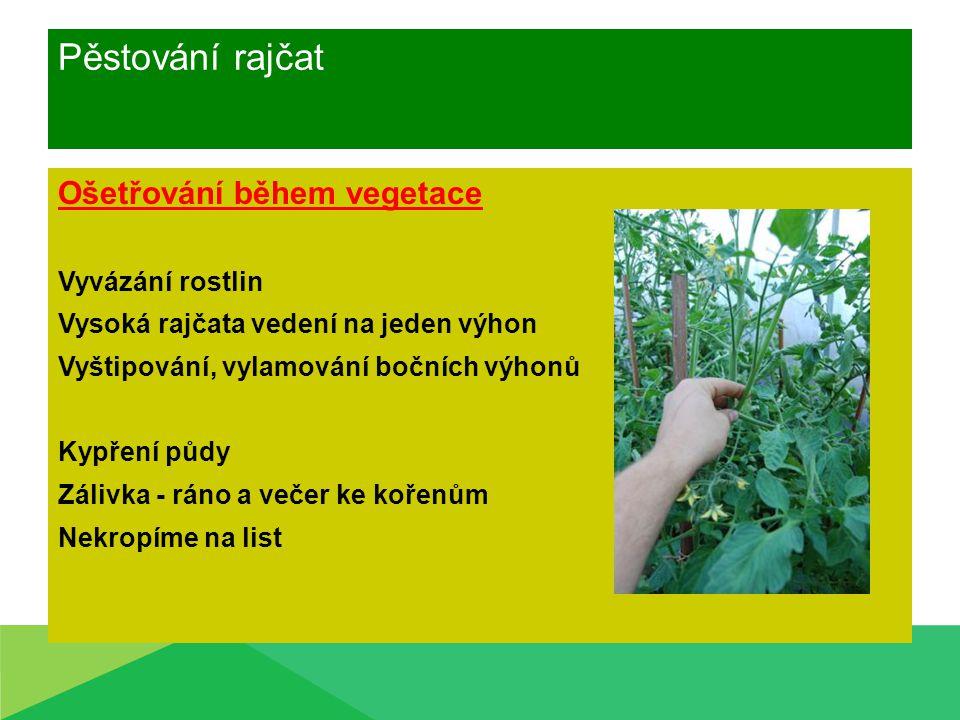 Pěstování rajčat Ošetřování během vegetace Vyvázání rostlin