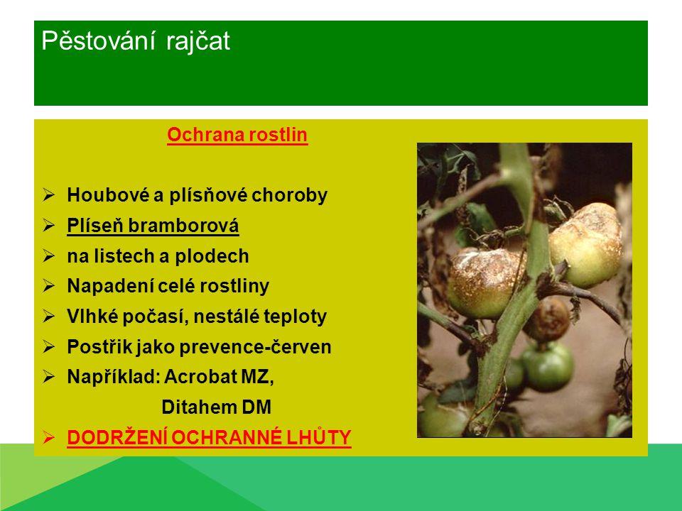 Pěstování rajčat Ochrana rostlin Houbové a plísňové choroby