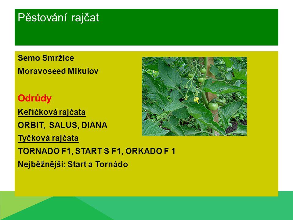 Pěstování rajčat Odrůdy Semo Smržice Moravoseed Mikulov