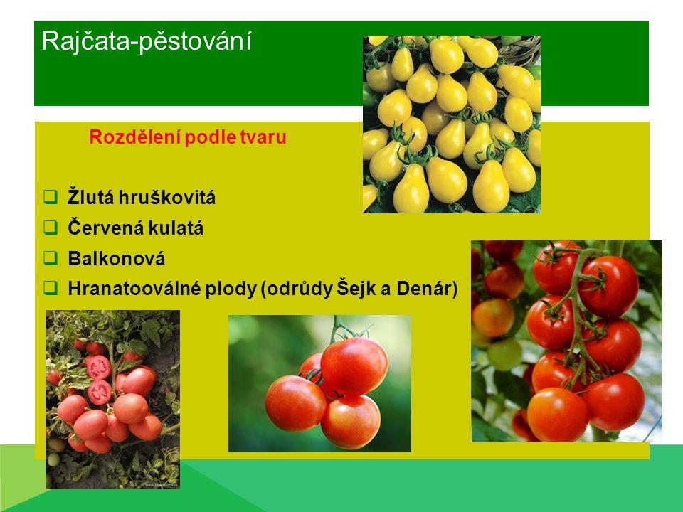 Rajčata-pěstování Rozdělení podle tvaru Žlutá hruškovitá