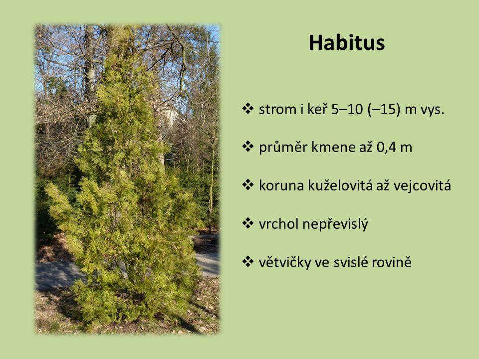 Habitus strom i keř 5–10 (–15) m vys. průměr kmene až 0,4 m