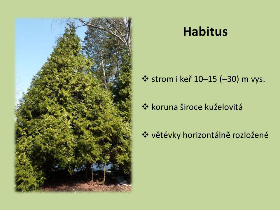 Habitus strom i keř 10–15 (–30) m vys. koruna široce kuželovitá