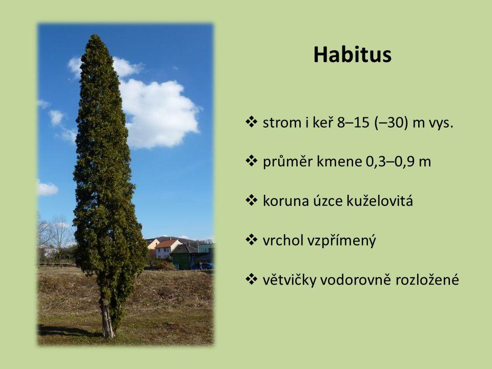 Habitus strom i keř 8–15 (–30) m vys. průměr kmene 0,3–0,9 m