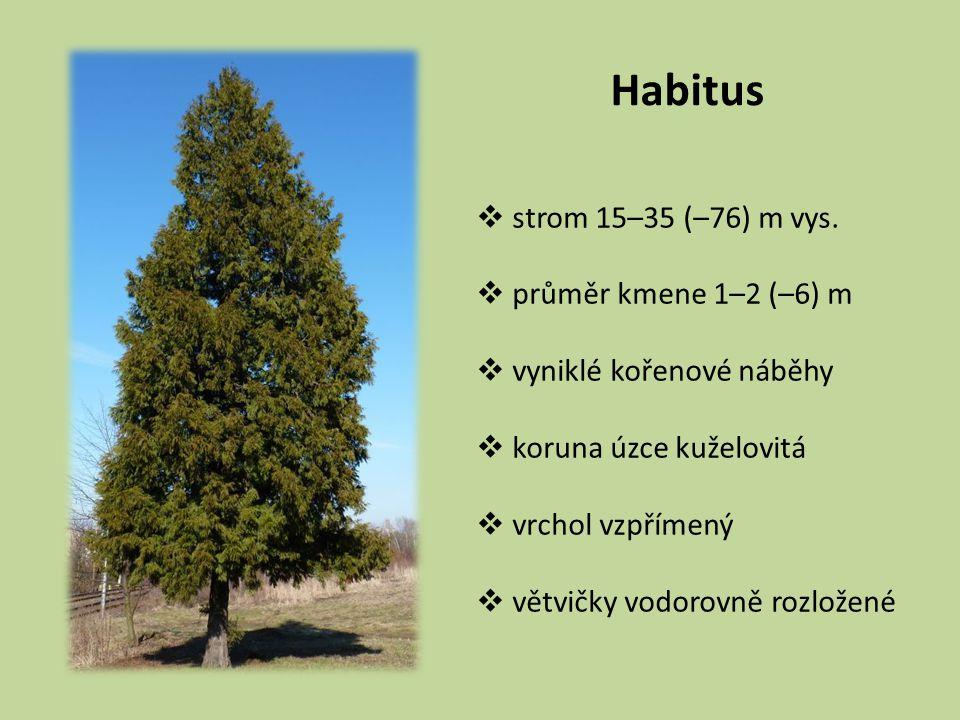 Habitus strom 15–35 (–76) m vys. průměr kmene 1–2 (–6) m