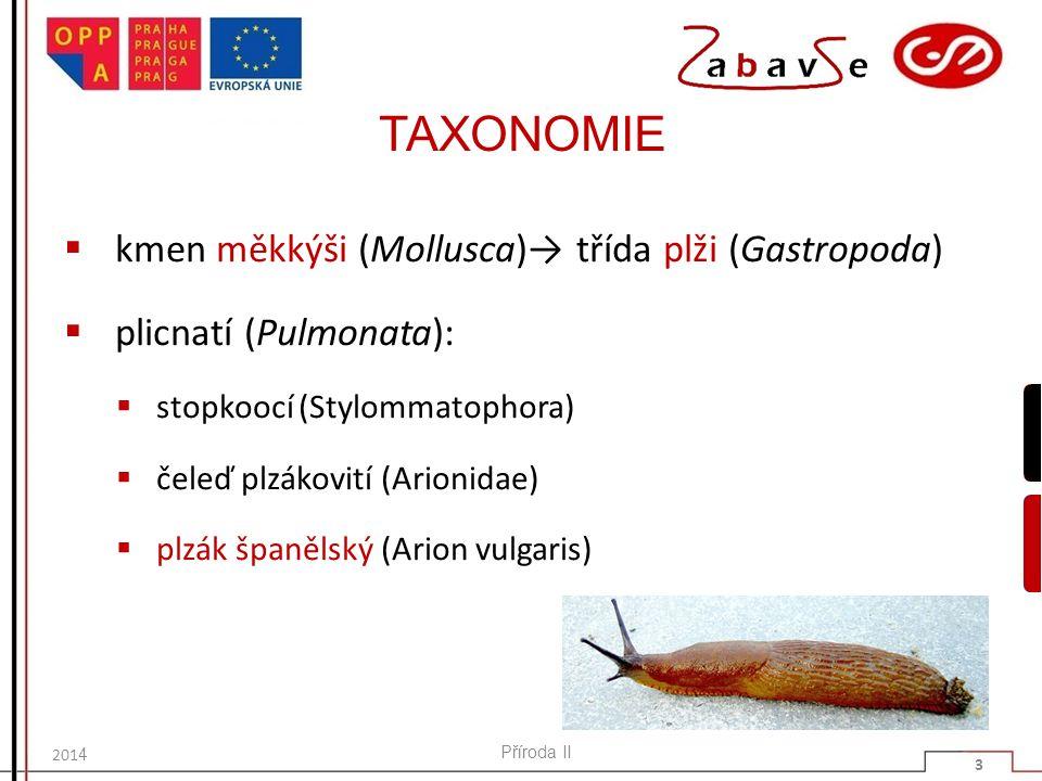 TAXONOMIE kmen měkkýši (Mollusca)→ třída plži (Gastropoda)