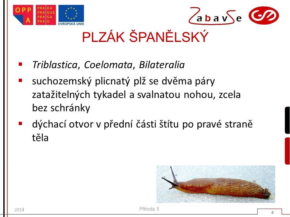 PLZÁK ŠPANĚLSKÝ Triblastica, Coelomata, Bilateralia