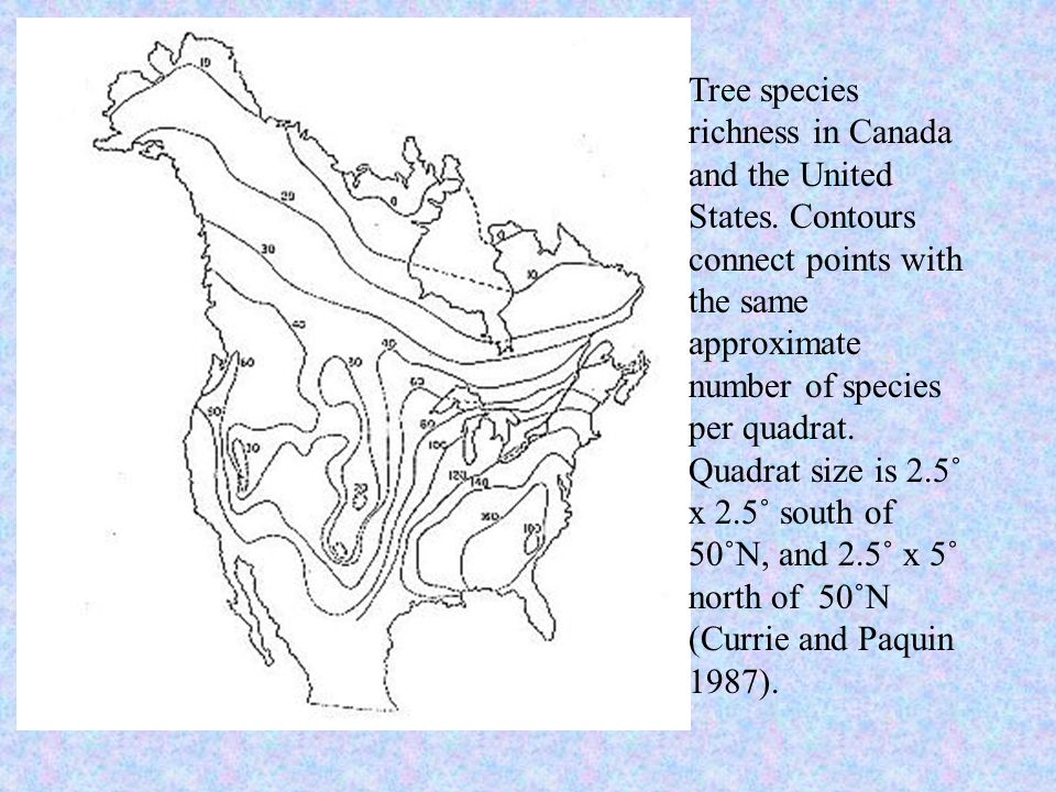 Tree species richness in Canada and the United States