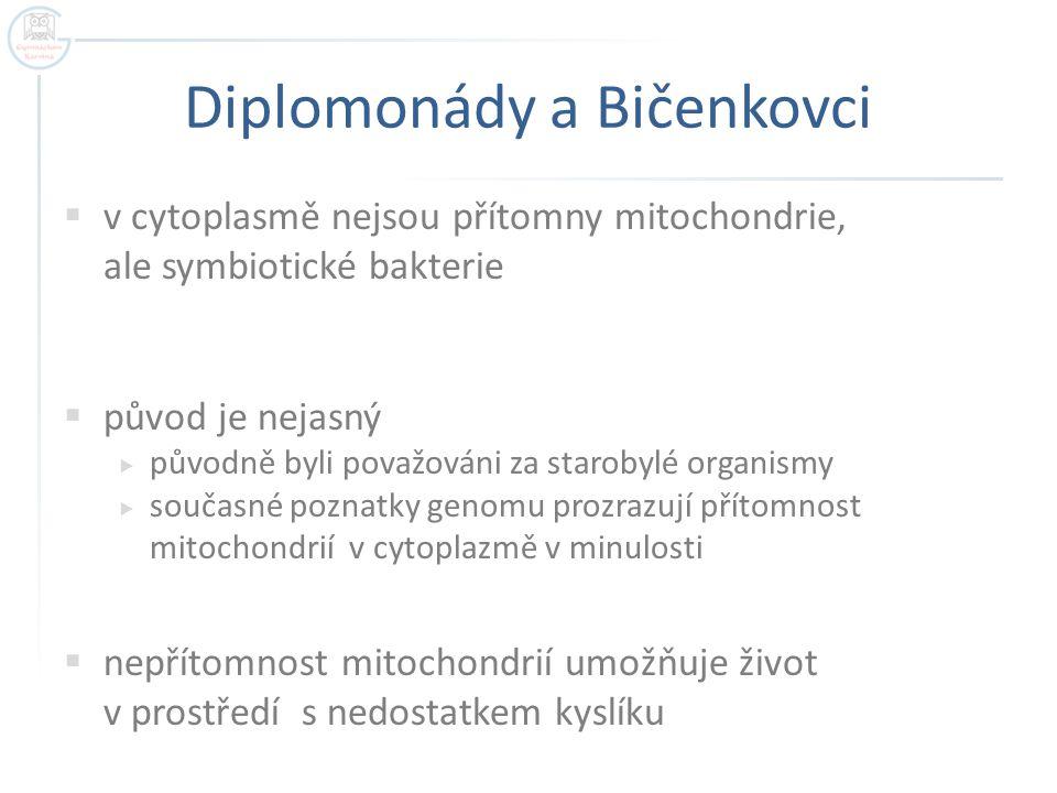 Diplomonády a Bičenkovci