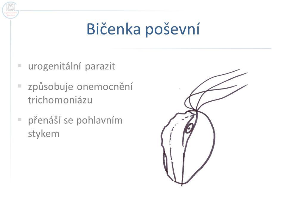 Bičenka poševní urogenitální parazit