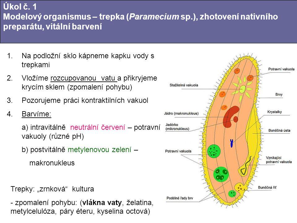 Úkol č. 1 Modelový organismus – trepka (Paramecium sp
