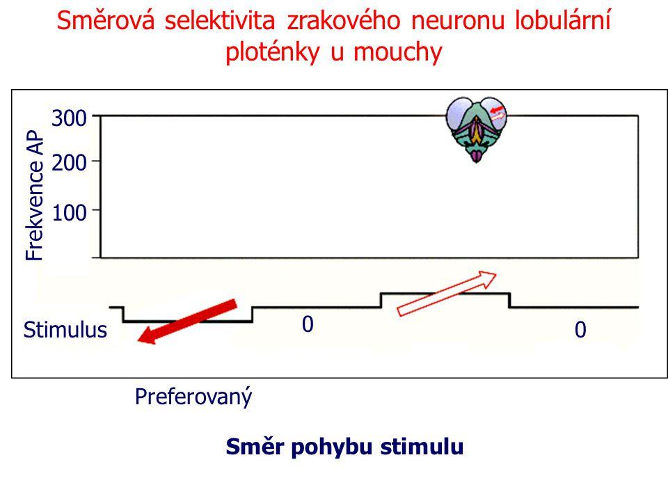 Směrová selektivita zrakového neuronu lobulární ploténky u mouchy