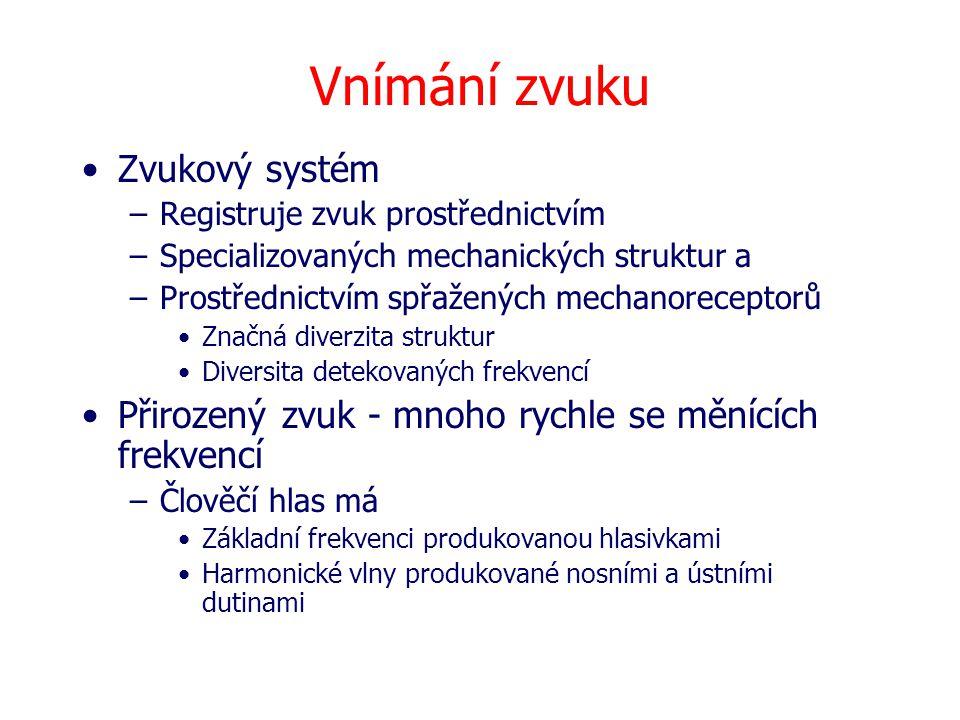 Vnímání zvuku Zvukový systém