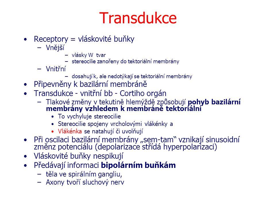 Transdukce Receptory = vláskovité buňky