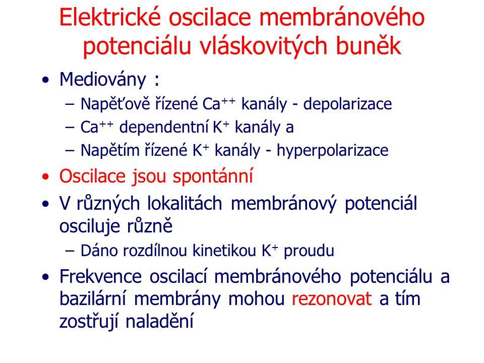 Elektrické oscilace membránového potenciálu vláskovitých buněk