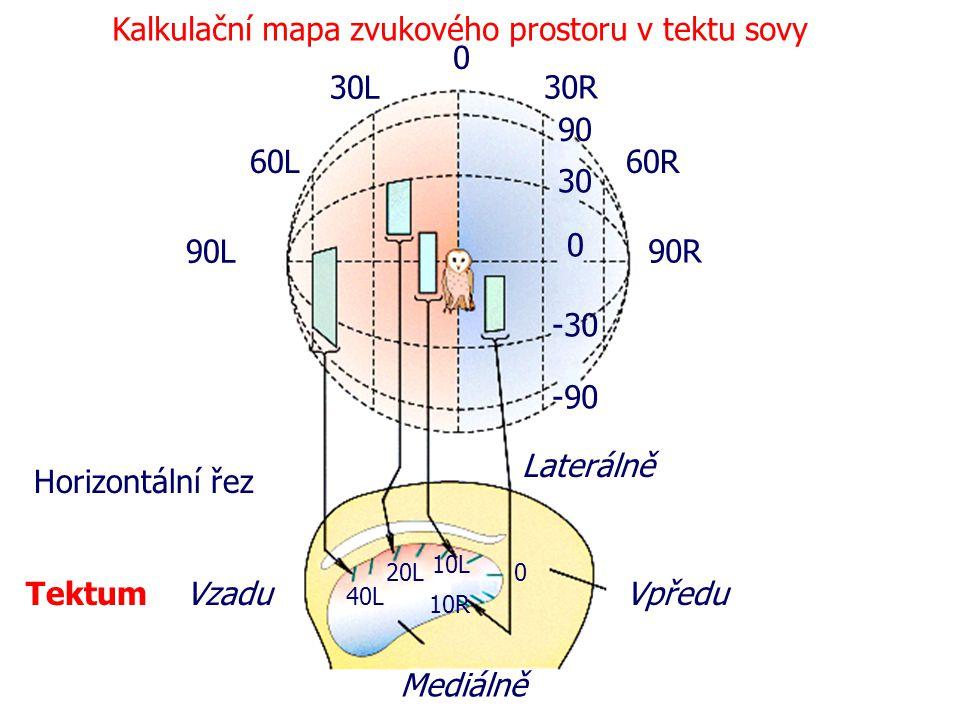 Kalkulační mapa zvukového prostoru v tektu sovy