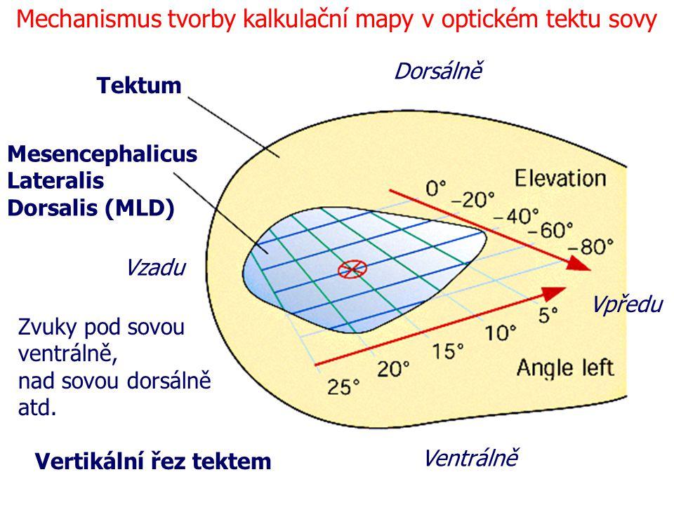 Mechanismus tvorby kalkulační mapy v optickém tektu sovy