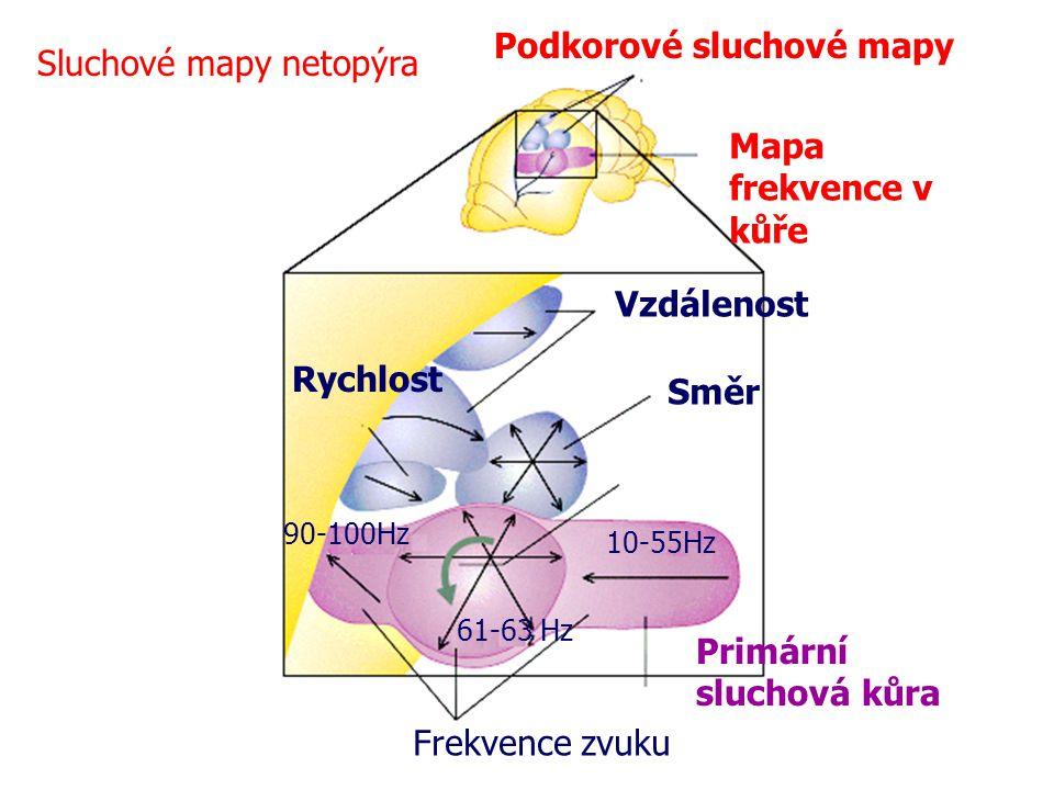 Podkorové sluchové mapy Sluchové mapy netopýra