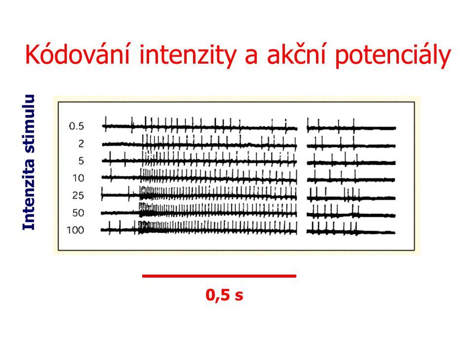 Kódování intenzity a akční potenciály