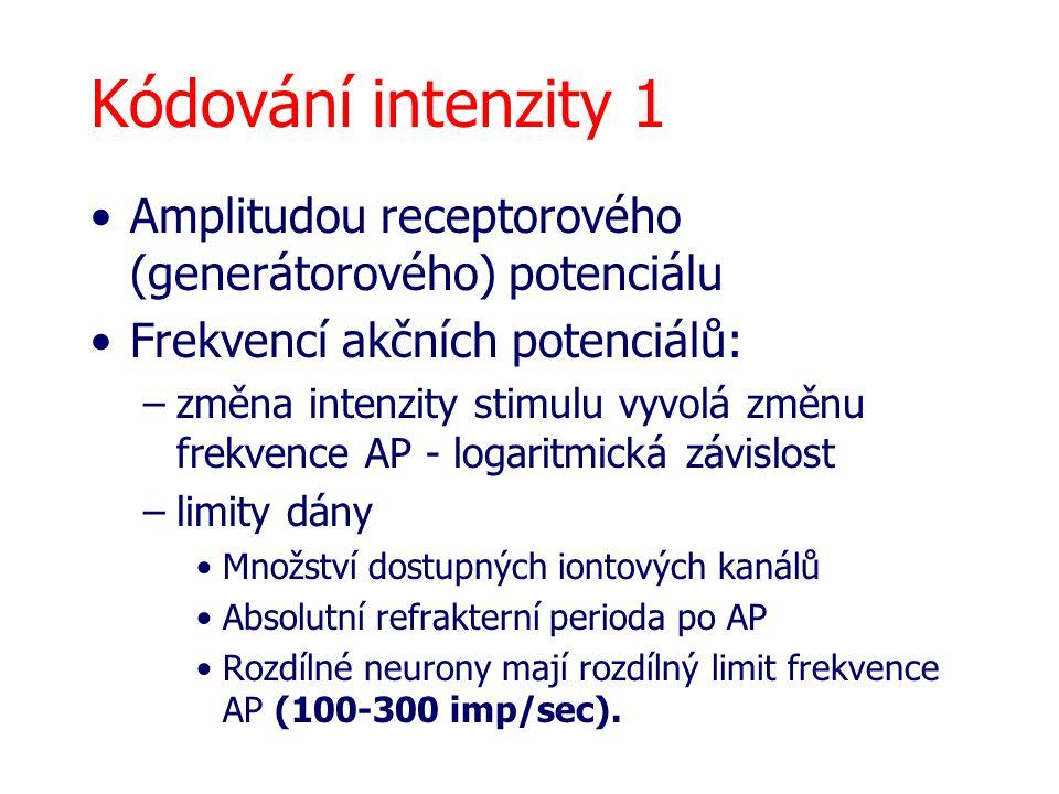 Kódování intenzity 1 Amplitudou receptorového (generátorového) potenciálu. Frekvencí akčních potenciálů: