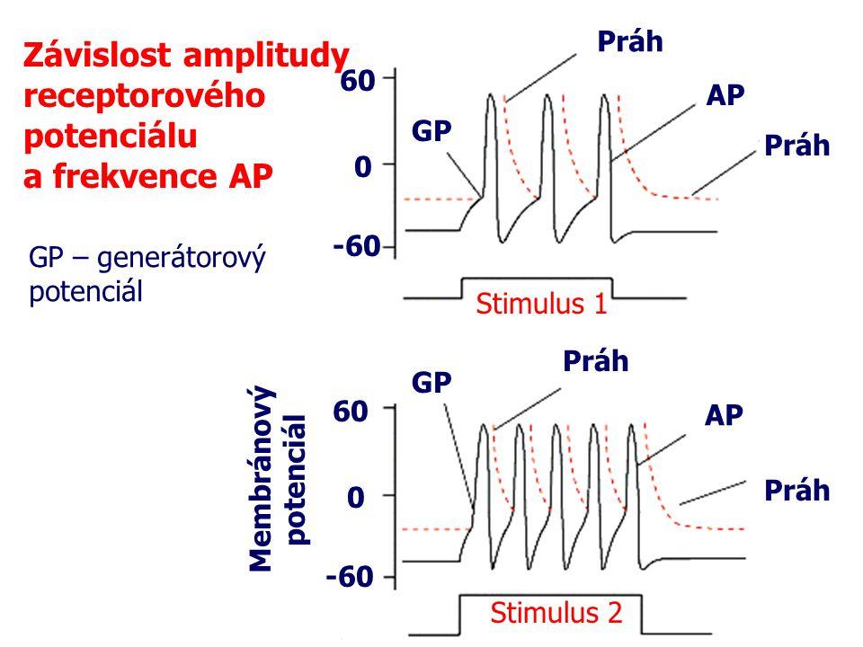 Závislost amplitudy receptorového potenciálu a frekvence AP Práh 60 AP
