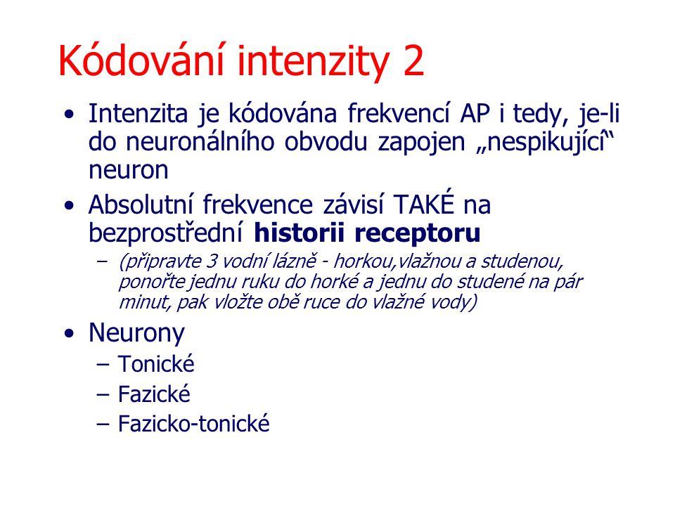 """Kódování intenzity 2 Intenzita je kódována frekvencí AP i tedy, je-li do neuronálního obvodu zapojen """"nespikující neuron."""