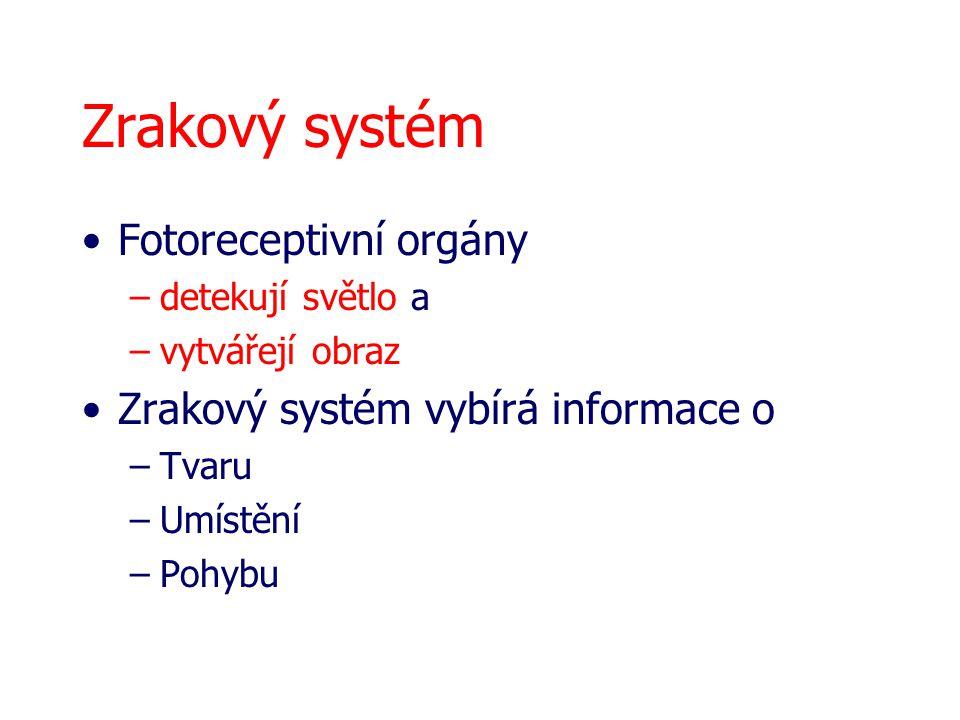 Zrakový systém Fotoreceptivní orgány Zrakový systém vybírá informace o
