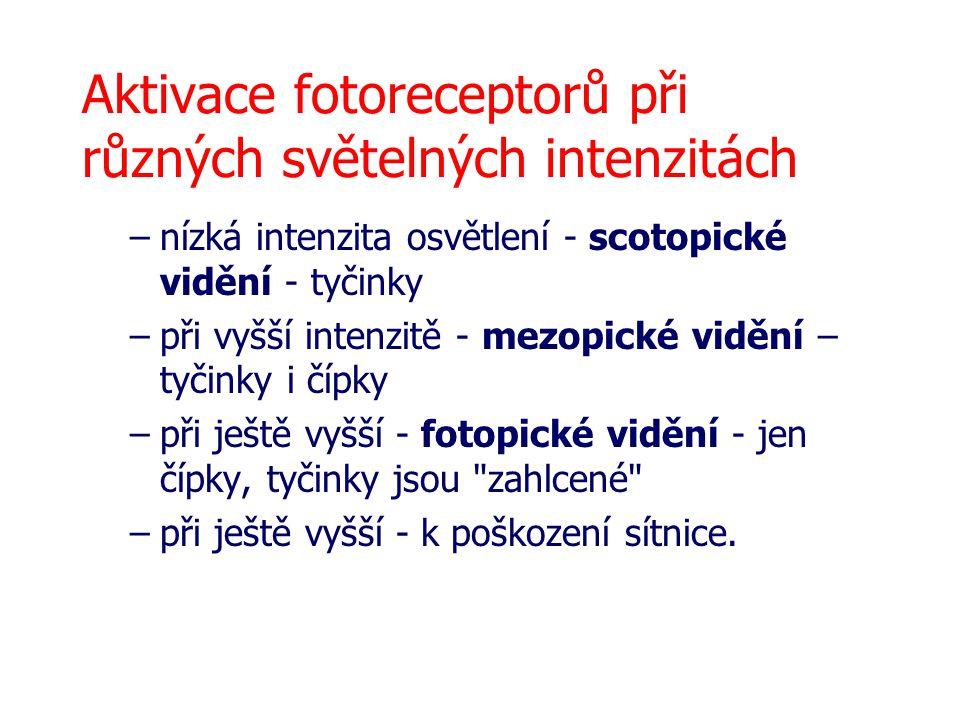 Aktivace fotoreceptorů při různých světelných intenzitách