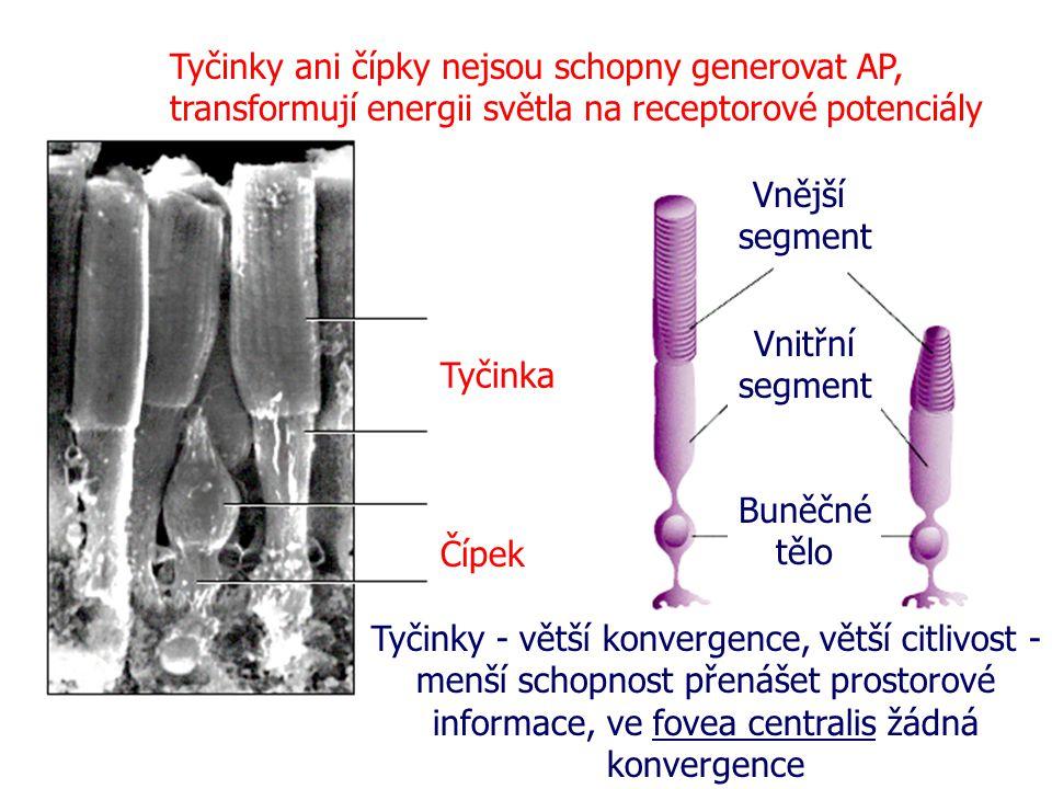 Tyčinky ani čípky nejsou schopny generovat AP, transformují energii světla na receptorové potenciály