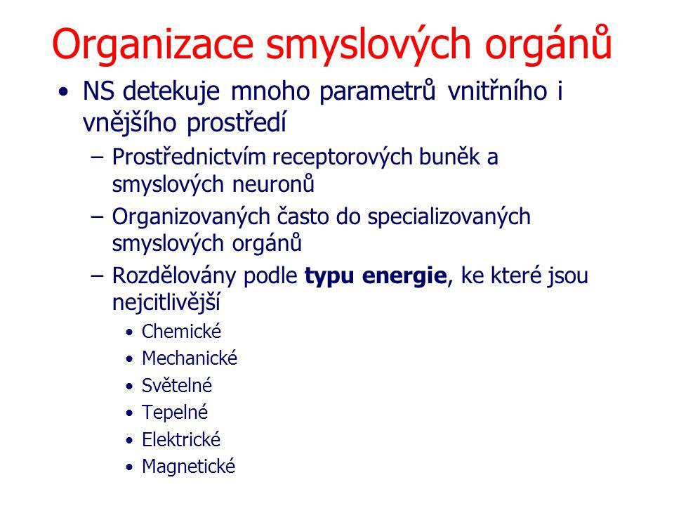 Organizace smyslových orgánů