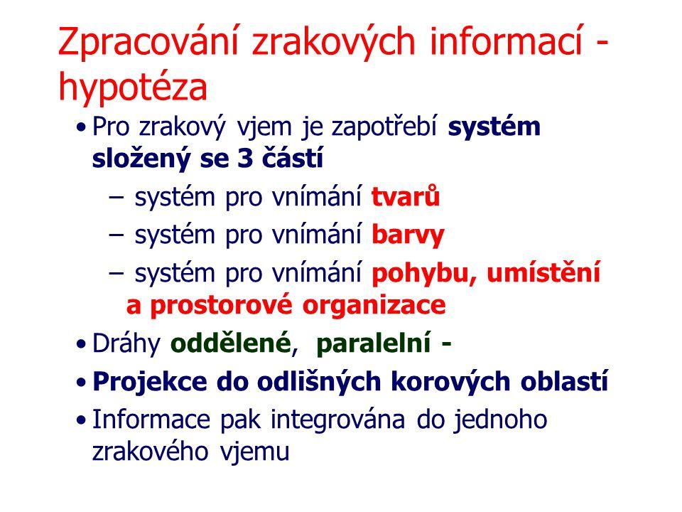 Zpracování zrakových informací - hypotéza