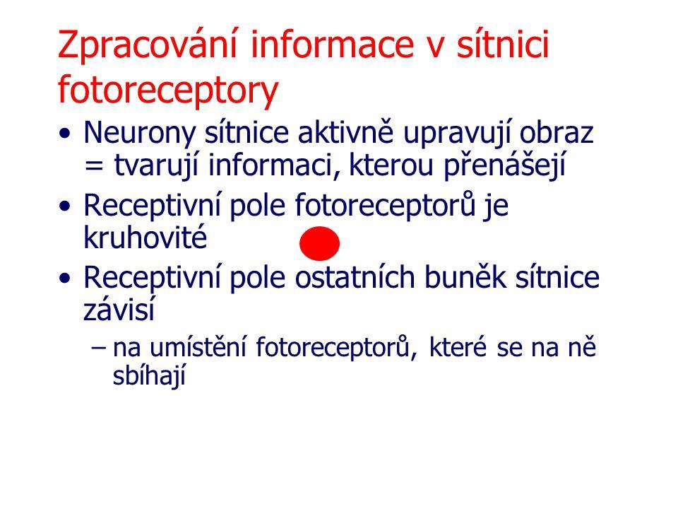 Zpracování informace v sítnici fotoreceptory