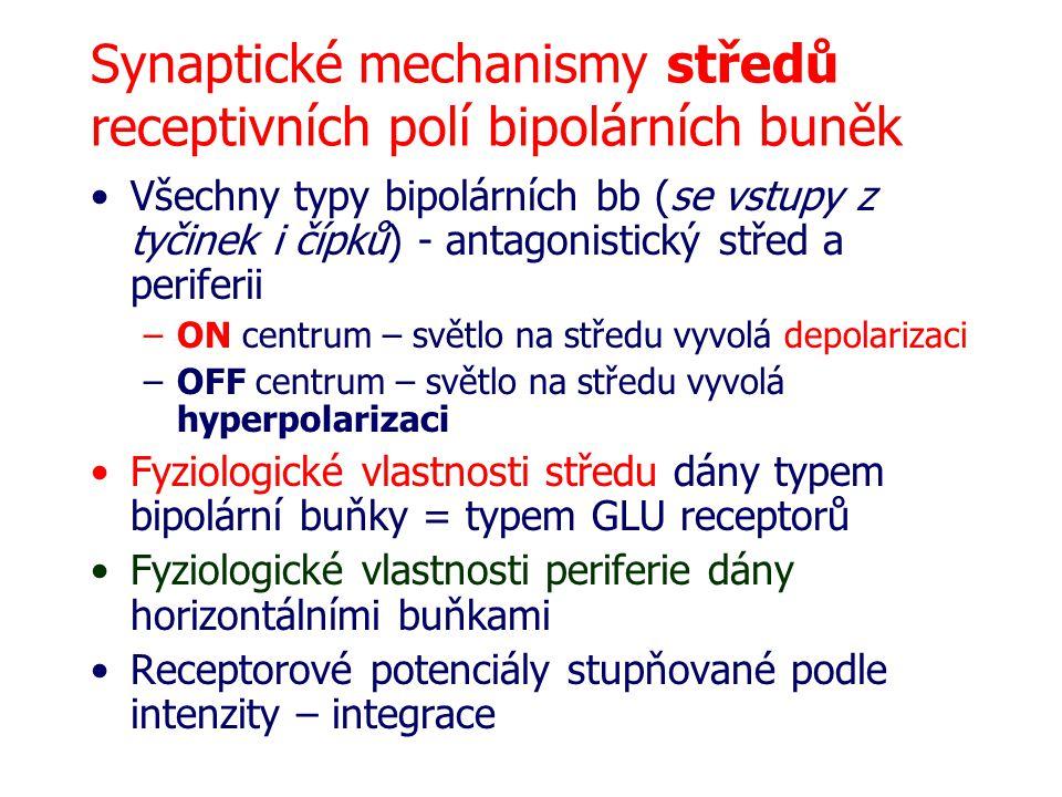 Synaptické mechanismy středů receptivních polí bipolárních buněk