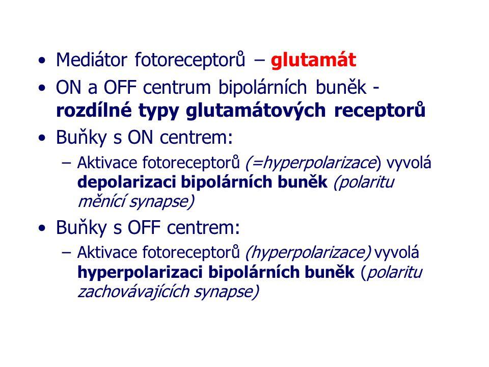 Mediátor fotoreceptorů – glutamát