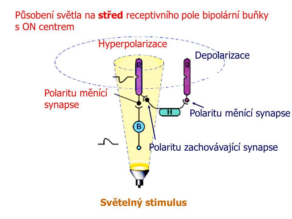 Působení světla na střed receptivního pole bipolární buňky s ON centrem