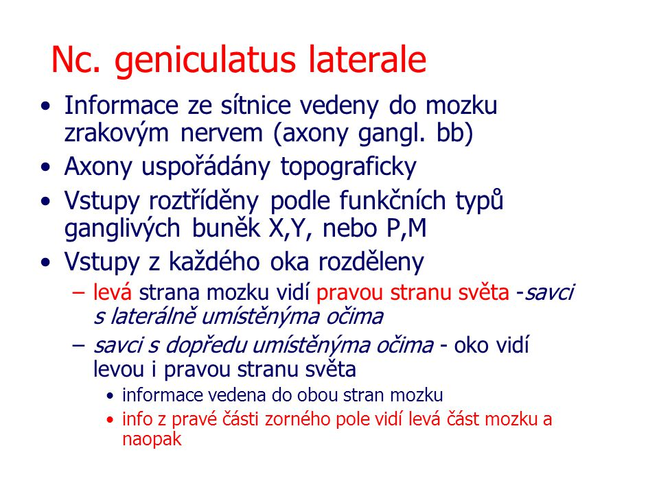 Nc. geniculatus laterale
