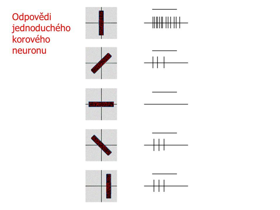 Odpovědi jednoduchého korového neuronu