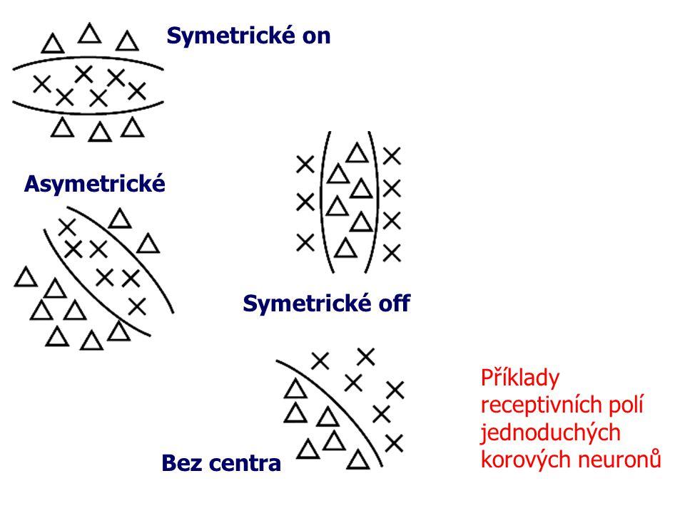 Symetrické on Asymetrické. Symetrické off. Příklady. receptivních polí. jednoduchých. korových neuronů.