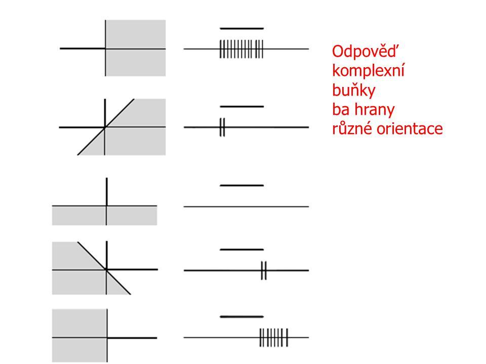 Odpověď komplexní buňky ba hrany různé orientace