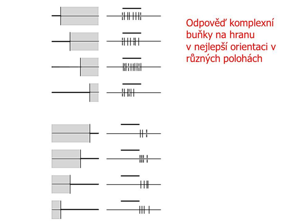 Odpověď komplexní buňky na hranu
