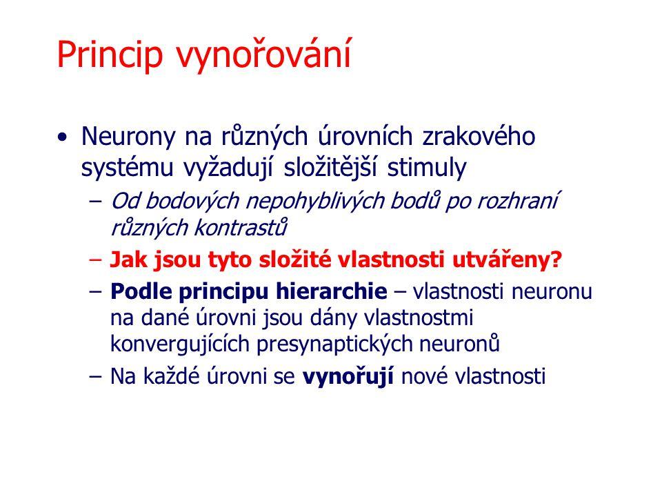Princip vynořování Neurony na různých úrovních zrakového systému vyžadují složitější stimuly.