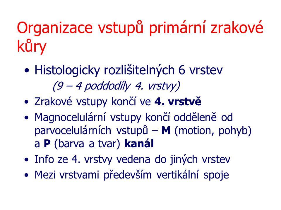 Organizace vstupů primární zrakové kůry