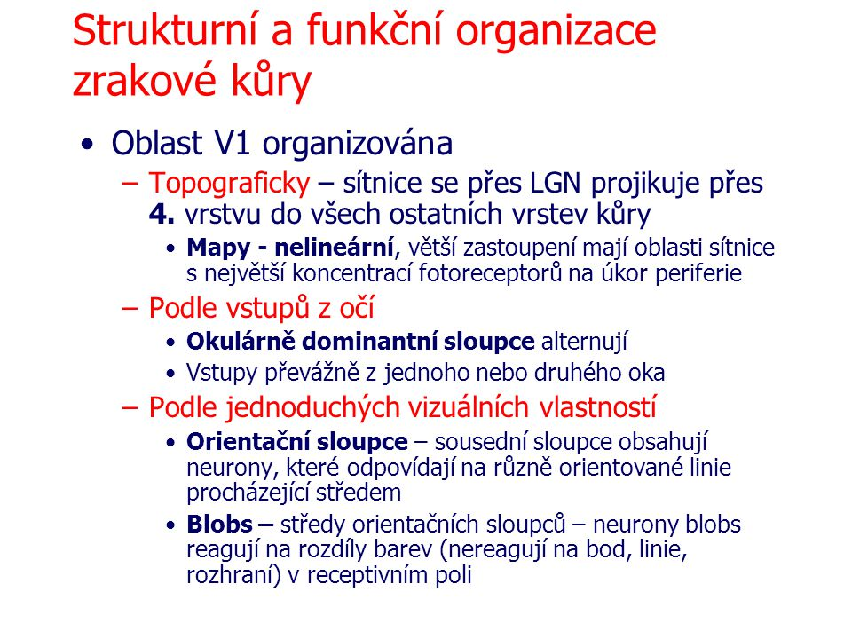 Strukturní a funkční organizace zrakové kůry